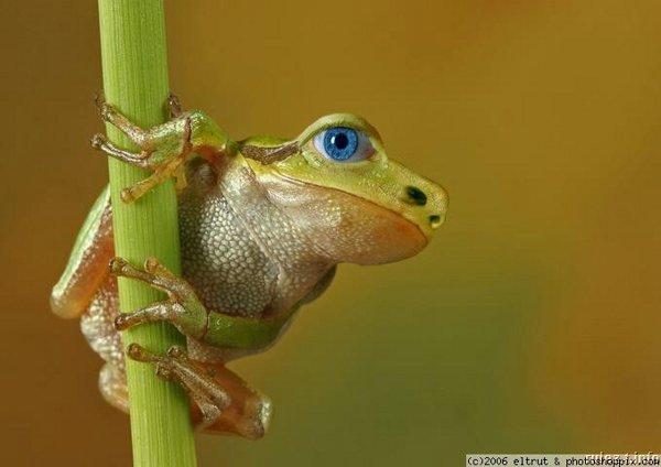 картинки животных насекомых тортов