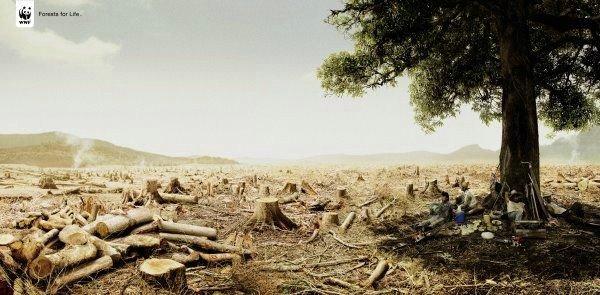 В защиту природы социальная реклама