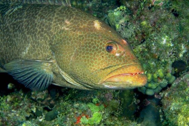 Рыбы карибского моря фото и названия