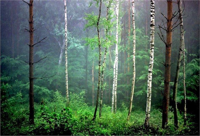 Смешанные леса своими руками