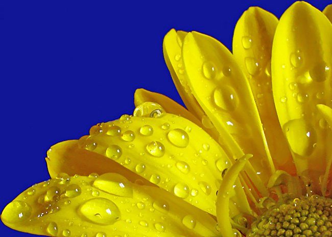 http://www.rulez-t.info/images/2008/04/25/makro_10.jpg