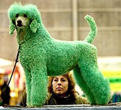 Perros Teñidos de Varios Colores