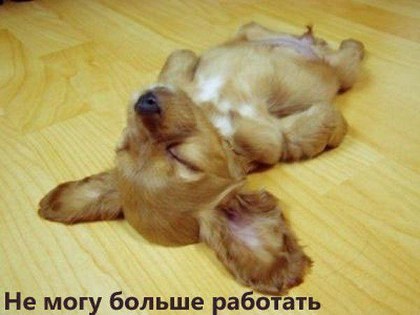 приколы про пятницу: