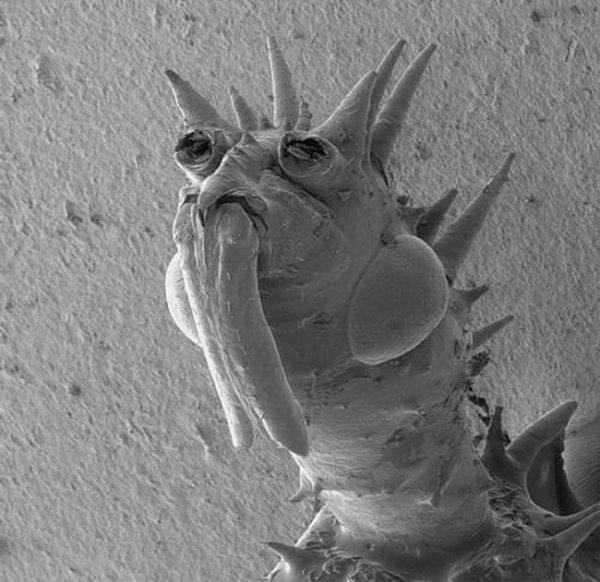 Твари под микроскопом 12 фото