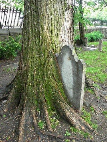 Необычные деревья 30 фото
