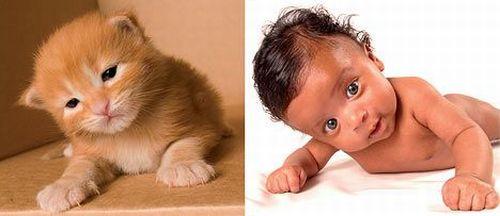 http://www.rulez-t.info/images/2008/09/23/kid_cat_04.jpg
