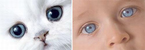 http://www.rulez-t.info/images/2008/09/23/kid_cat_05.jpg