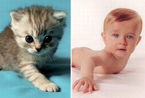 http://www.rulez-t.info/images/2008/09/23/kid_cat_08.jpg