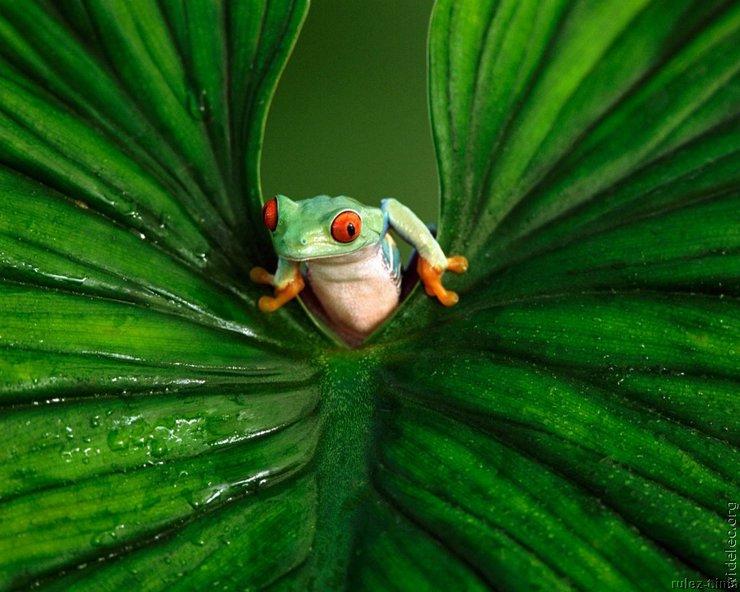 Лягушки (25 фото) » Прикольные картинки ...: www.rulez-t.info/animals/8310-ljagushki-25-foto.html