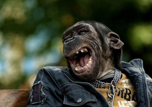 Как Мягкие обезьянки своими руками к новому