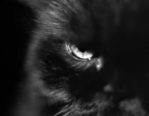 Счастливые черные кошки (42 фото)
