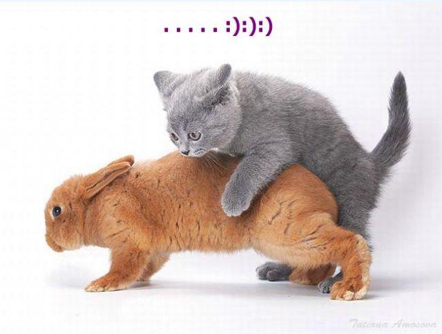 "...распускаются "" даже 2-х месячные котята."