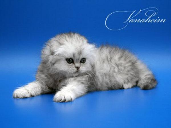 Котята в карманах (22 фото).  Котята (21 фотография).