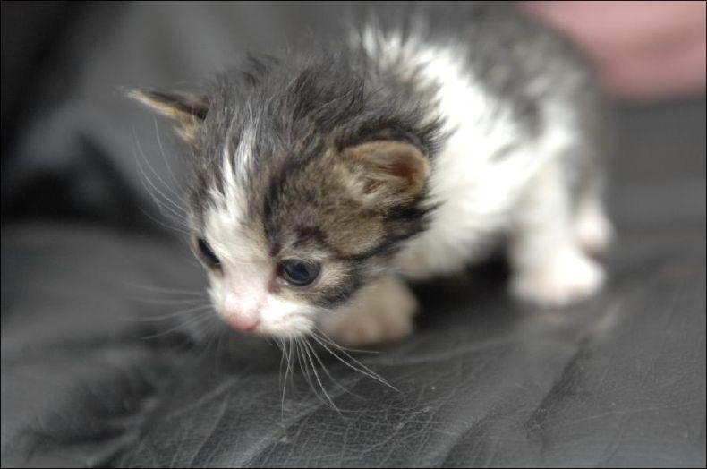 Необычная мама для обычных котят