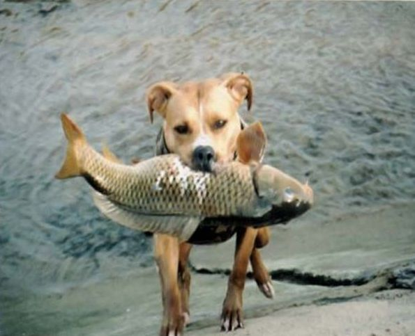 http://www.rulez-t.info/uploads/posts/2009-03/1237326287_fish_dog_01.jpg