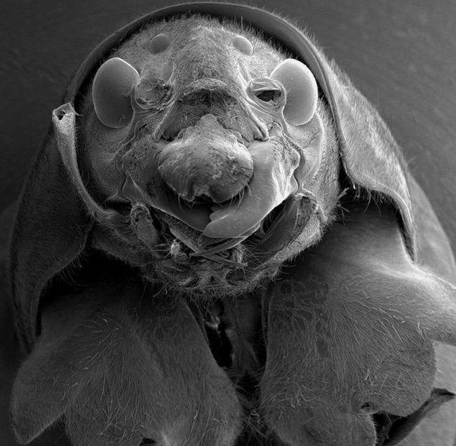 Микробы под микроскопом