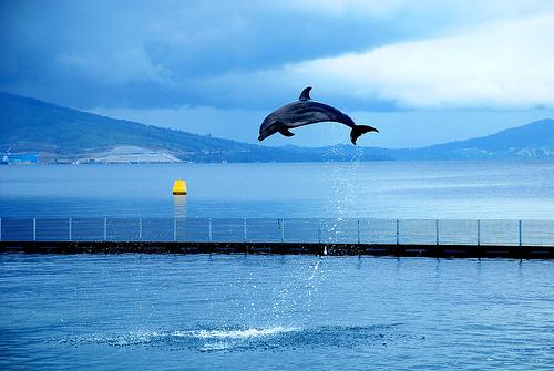 Языком — языком дельфинов
