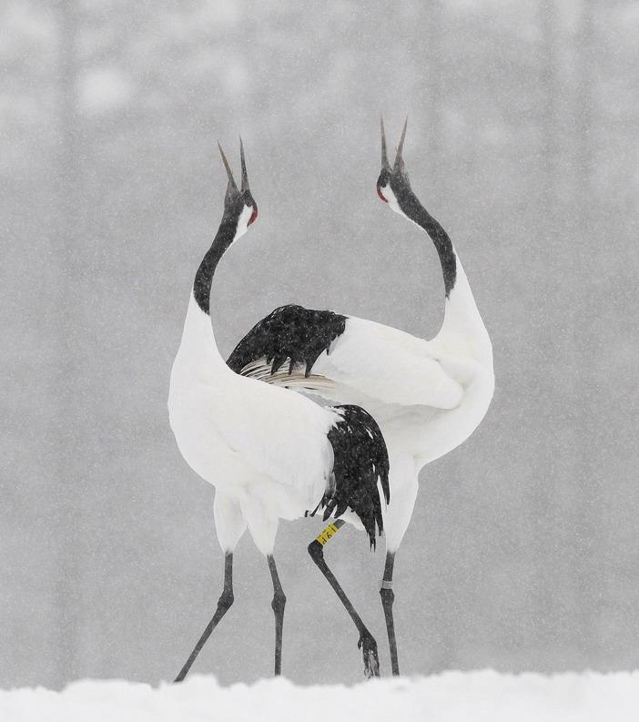 Животные от Harry Eggens (22 фото)