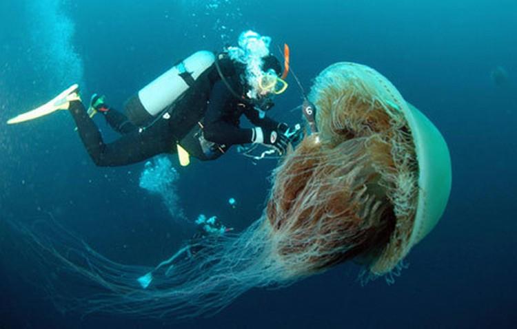 Медузы (10 фото)