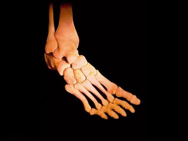 El cuerpo humano por dentro (imagenes sorprendentes)