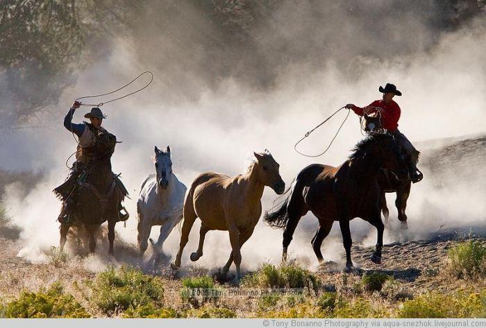 как изобличать дикого коня