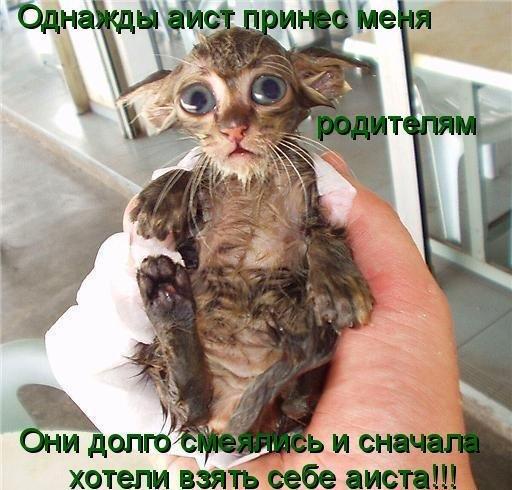 прикол животный: