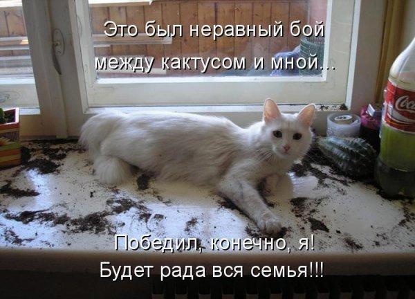 http://www.rulez-t.info/uploads/posts/2009-06/1246369701_jivotnie_7.jpg