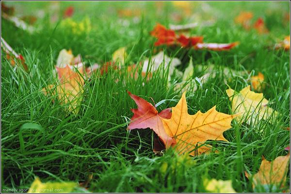 Осень сентябрь
