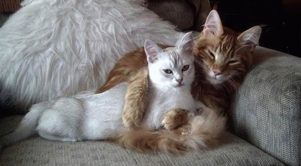 23 февраля открытки кошки