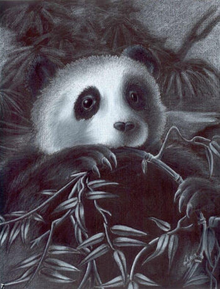 Ретро, панда рисунок смешная