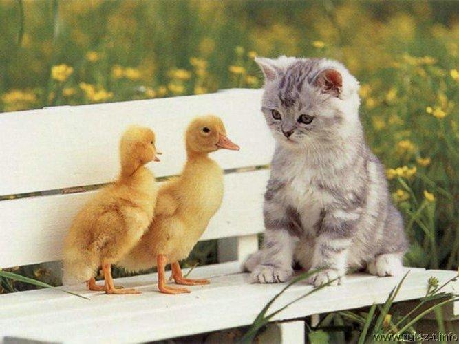 http://www.rulez-t.info/uploads/posts/2009-11/1258049235_cats02.jpg