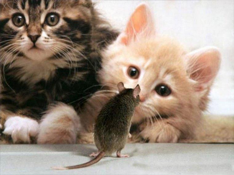 Эмоциональные коты и кошки 23 фото