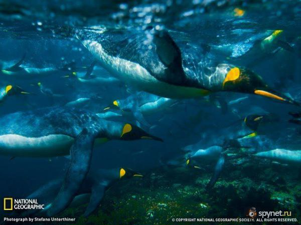 �� National Geographic