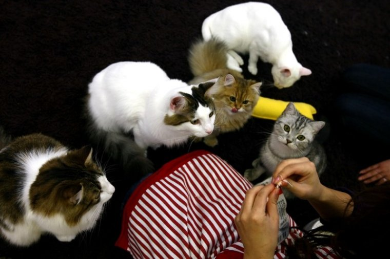 Кошечки (26 фото)