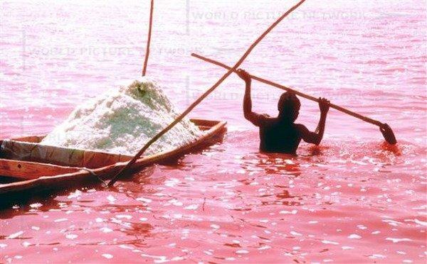 Необычное розовое озеро в Сенегале