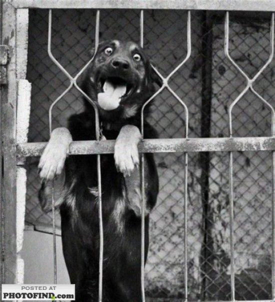 Эмоции животных