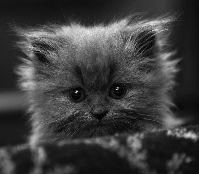 Кошачьи во всей красе