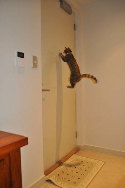 Фотожабы на кота