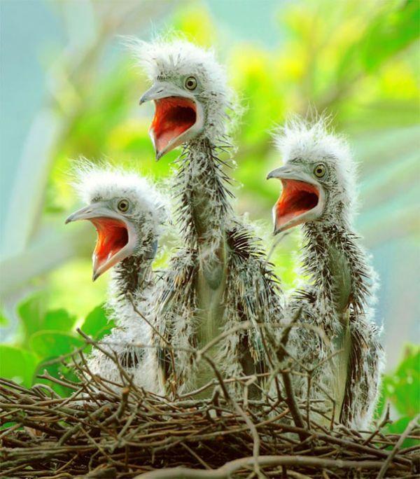 Красивые фотограффии птиц от John & Fish
