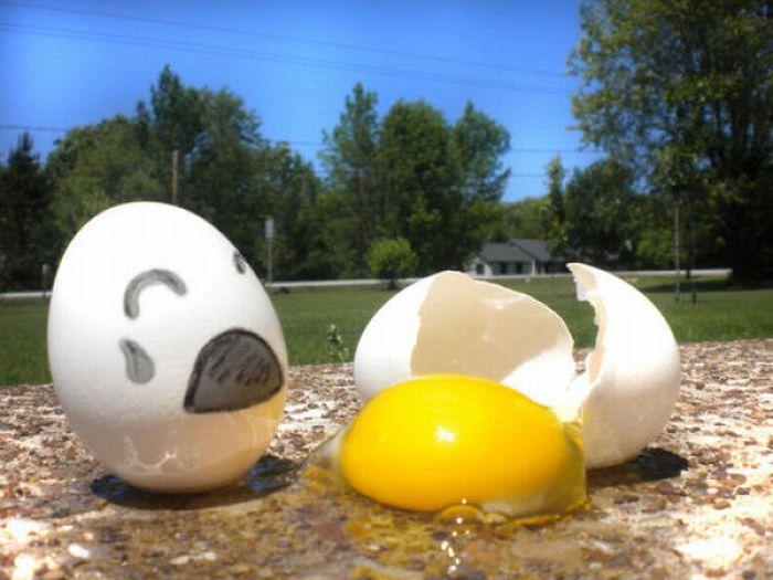 Жизнь яиц