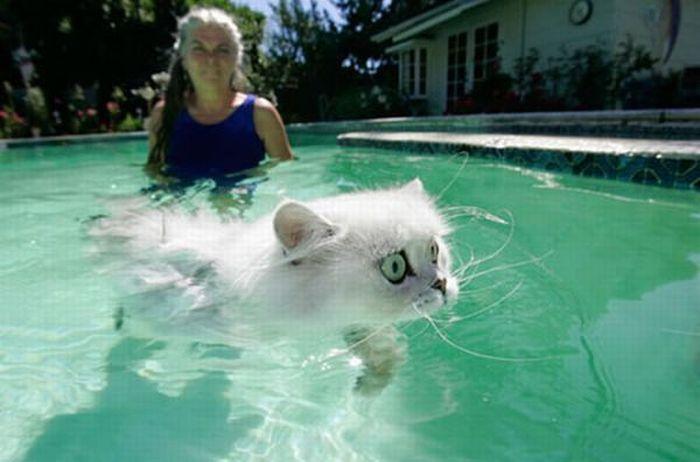 Плавающие коты