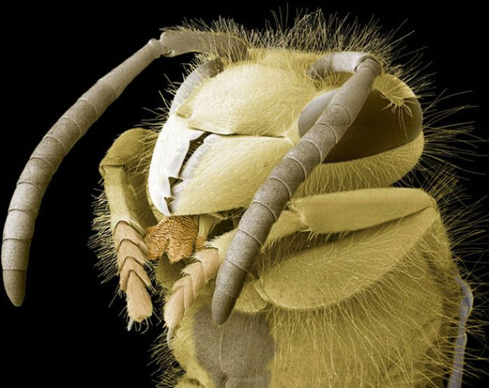 Монстры под микроскопом (20 фото)
