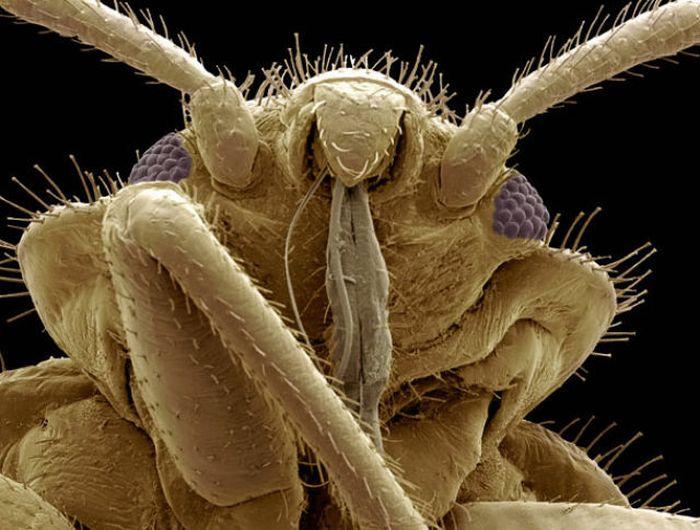 Монстры под микроскопом 20 фото