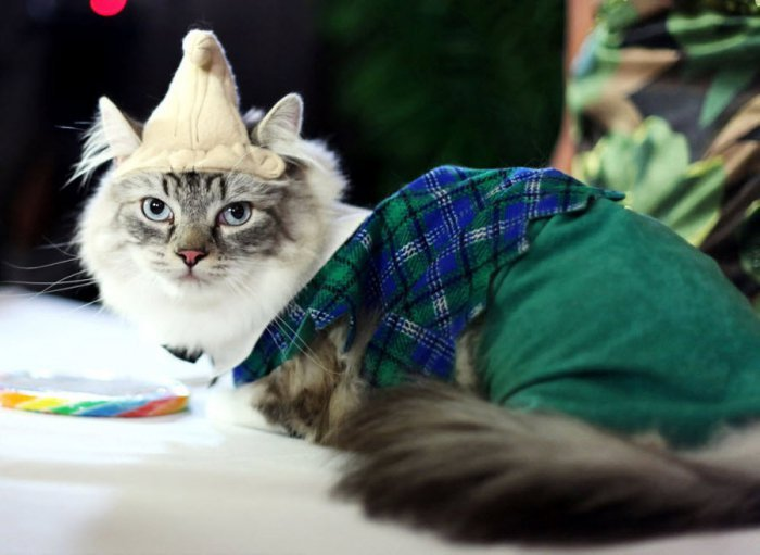 �������� ����� Algonquin Cat Fashion Show 2010