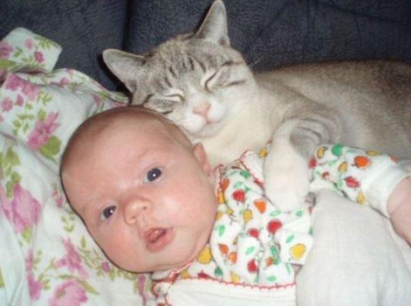 Кошки и их необычные друзья 1288357501_1288295136_029