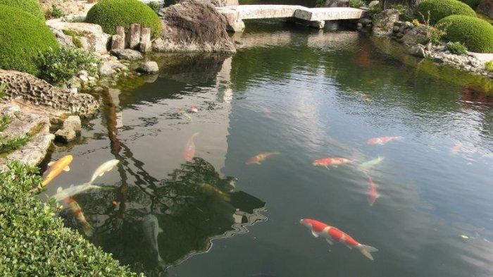 Самы красивый сад Японии