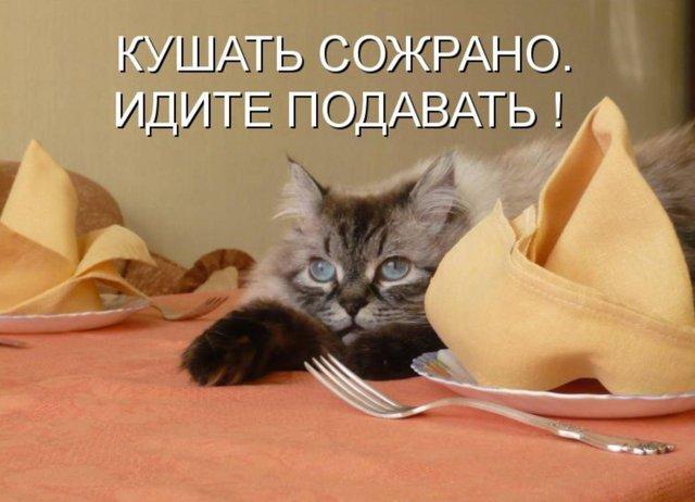 Картинки кошки пора жрать приколы