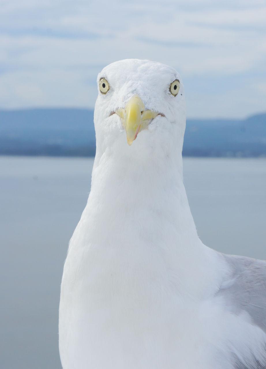 Про, прикольная картинка чайки
