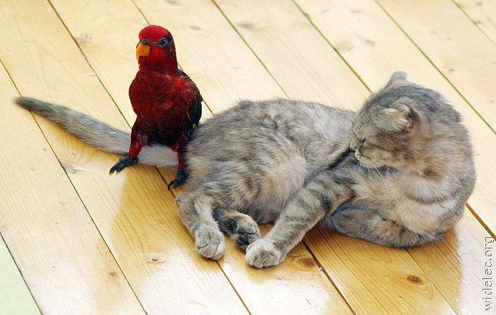 ориджинал домашние животные бывают разные продолжение опционы без