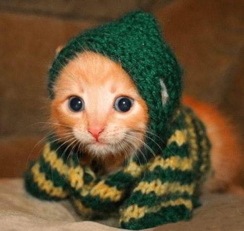 Маленькие котята самые милые и